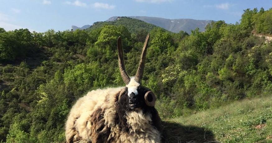 Hunting Area Nidze - Mouton a quatre cornes